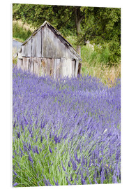 Forex  Lavender field and small shed - Janell Davidson