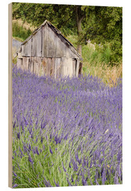 Madera  Lavender field and small shed - Janell Davidson
