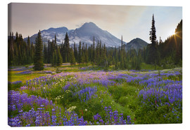 Lienzo  Lupine in flower meadow at sunrise - Gary Luhm