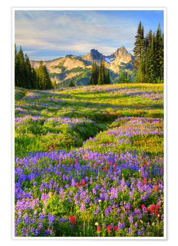 Póster Tatoosh Range y Flower Meadow