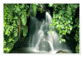 Póster  Small waterfall in the rainforest - Kevin Schafer