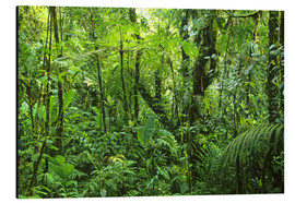 Aluminio-Dibond  Densely covered, green forest area - Kevin Schafer