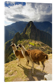 Metacrilato  Llamas and a view of Machu Picchu - Howie Garber