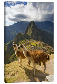 Lienzo  Llamas and a view of Machu Picchu - Howie Garber