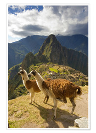 Póster  Llamas and a view of Machu Picchu - Howie Garber