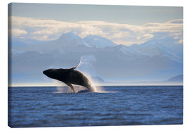 Lienzo  Humpback Whale on Frederick Sound - Paul Souders