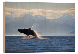 Madera  Humpback Whale on Frederick Sound - Paul Souders