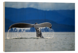 Cuadro de madera  Humpback whale raises its tail when diving - Paul Souders
