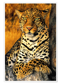 Póster  African Leopard - Dave Welling