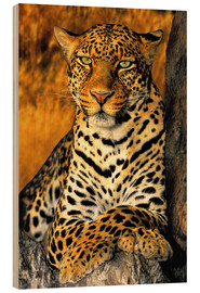 Madera  African Leopard - Dave Welling
