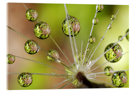 Christopher Talbot Frank - Water drops on a dandelion
