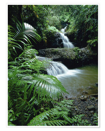 Póster  Waterfall in the island of hawaii - Douglas Peebles