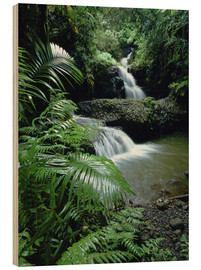 Madera  Waterfall in the island of hawaii - Douglas Peebles