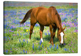 Lienzo  Horse on a meadow with wildflowers - Darrell Gulin