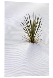 Don Grall - Yucca plant on a sand dune