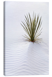 Lienzo  Yucca plant on a sand dune - Don Grall