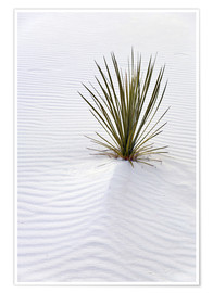 Póster  Yucca plant on a sand dune - Don Grall