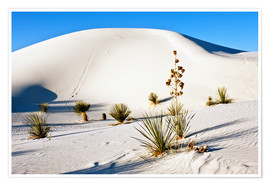Póster  White Sands National Monument - Transverse Dunes and Soaptree Yucca - Bernard Friel
