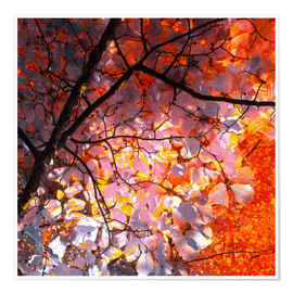 Póster autumn tree I