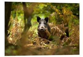 David Slater - Wild Boar in deciduous woodland