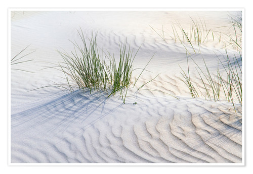 Póster Dunegrasses in the sand