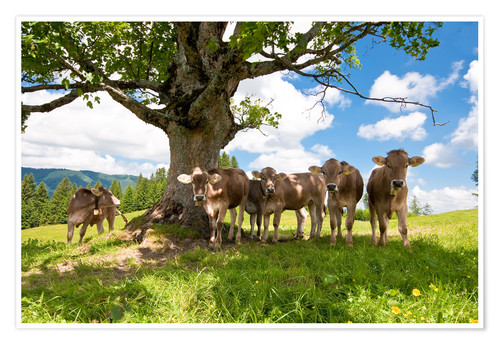 Póster Young Cows