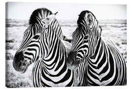 Lienzo  Two Zebras - Jan Schuler
