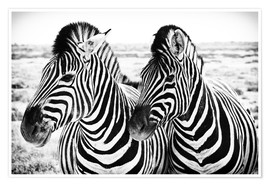 Póster  Two Zebras - Jan Schuler