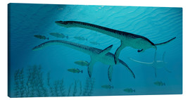 Lienzo  Three Plesiosaurus dinosaurs migrate with a school of fish. - Corey Ford
