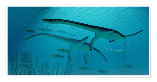 Póster Three Plesiosaurus dinosaurs migrate with a school of fish.