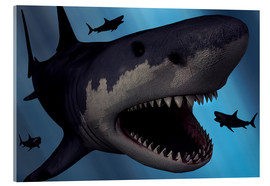 Cuadro de metacrilato  A Megalodon shark from the Cenozoic Era - Mark Stevenson