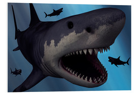 Cuadro de PVC  A Megalodon shark from the Cenozoic Era - Mark Stevenson