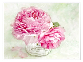 Póster  pink ranunculus - Lizzy Pe