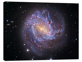 Lienzo  The Southern Pinwheel Galaxy - Robert Gendler