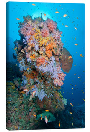 Lienzo  Colourful reef scene - Mathieu Meur