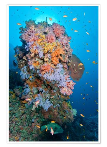 Póster Colourful reef scene