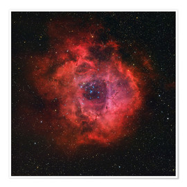 Póster The Rosette Nebula