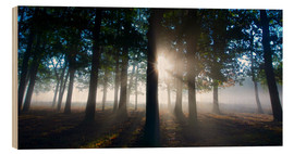 Madera  Silhouettes of tree trunks in the autumn mist at dawn - Alex Saberi