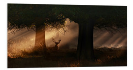 Alex Saberi - The silhouette of a Roth Irschs, Cervus elaphus, in the morning in the autumn mist