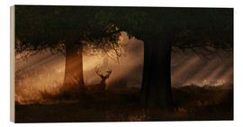 Madera  The silhouette of a Roth Irschs, Cervus elaphus, in the morning in the autumn mist - Alex Saberi