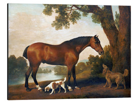 Aluminio-Dibond  Horse and two dogs - George Stubbs