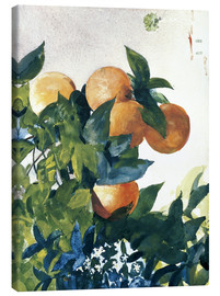 Lienzo  Oranges on a Branch - Winslow Homer
