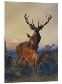 Cuadro de metacrilato  A Stag with Deer at Sunset - Charles Jones