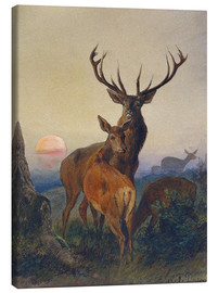 Lienzo  A Stag with Deer at Sunset - Charles Jones