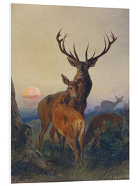 Cuadro de PVC  A Stag with Deer at Sunset - Charles Jones