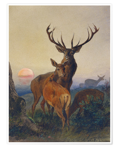 Póster A Stag with Deer at Sunset