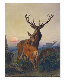 Póster  A Stag with Deer at Sunset - Charles Jones