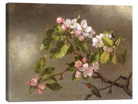 Lienzo  Apple Blossoms and a Hummingbird - Martin Johnson Heade