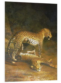 Cuadro de PVC  Two Leopards lying in the Exeter Exchange - Jacques Laurent Agasse