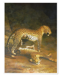 Póster Two Leopards lying in the Exeter Exchange